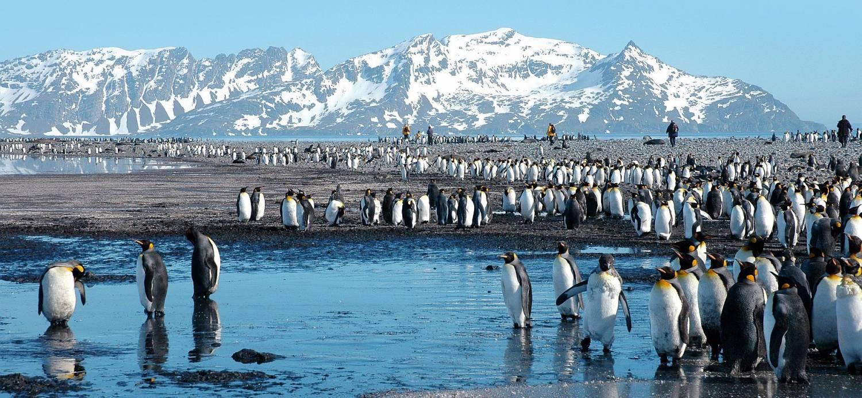 antarktis-reise-viele-königspinguine-polar-quest