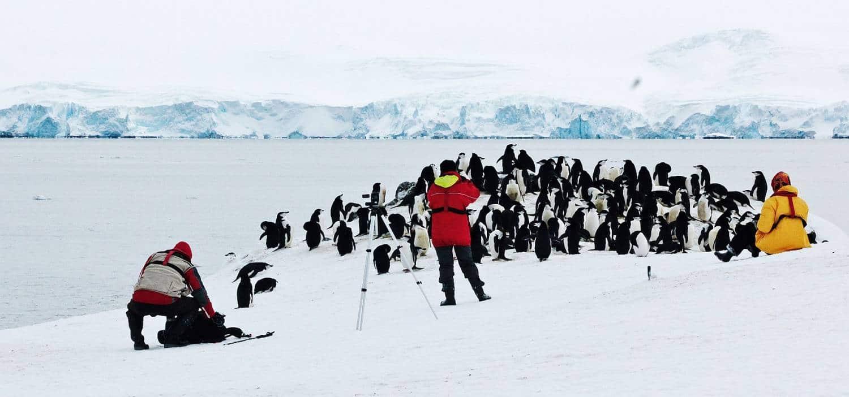 antarktis-reise-zügelpinguine-polar-quest