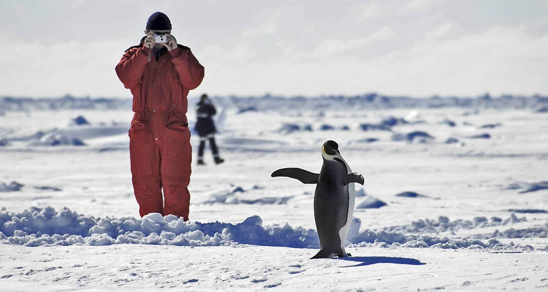 antarktis - pinguin-und-fotograph